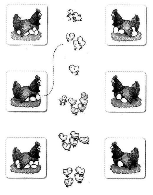 Bài tập nối ổ trứng gà mẹ đang ấp với số gà con sẽ nở