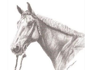 Tại sao con ngựa vẫn ăn được cỏ